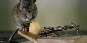 Trampas de ratas